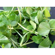 Herb Watercress