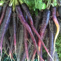Carrot Black Wonder