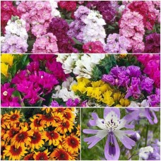 Exotic Winter Flowers-4 Packets