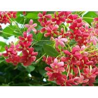 Malti plants